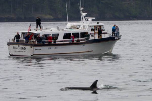 Puget Sound Express - whale watching for kids