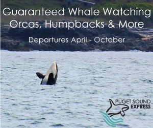 Puget Sound Express - Whale Watching Tours : With low fares - and a 98% whale sighting success rate - reserve a seat on one of these comfortable boats for a day of whale watching. You'll never forget the experience.