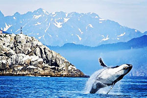 USA River Cruises - Puget Sound & Olympic NP