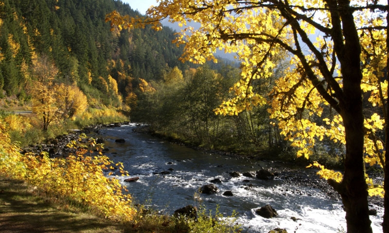 Elwha River in Olympic National Park