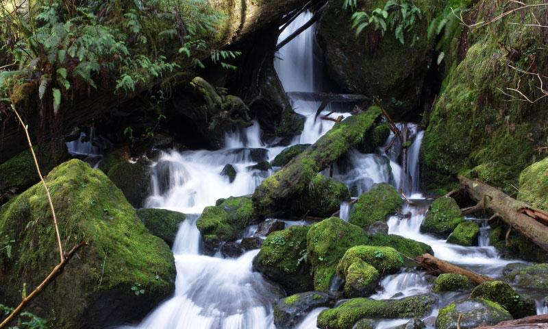 Merriman Falls in Olympic National Park