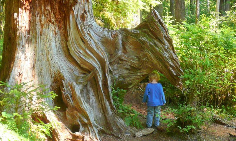 Hoh Rainforest In Washington Alltrips