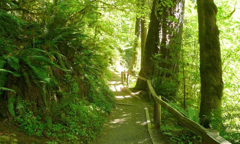 All Seasons Rv >> Hoh Rainforest in Washington - AllTrips