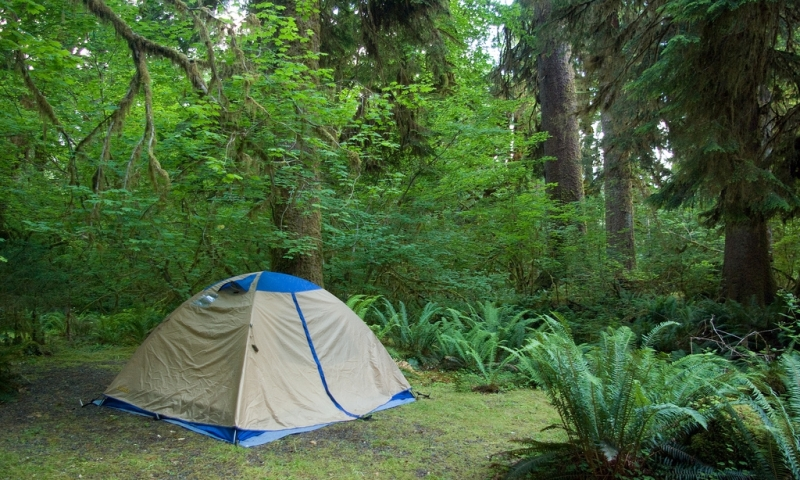 hoh campground olympic national park alltrips