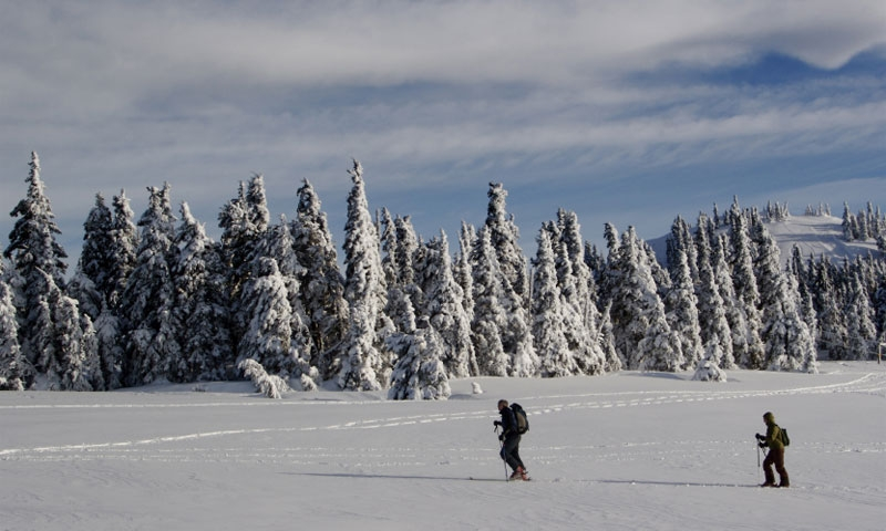 Cross Country Skiing in Olympic National Park