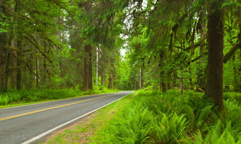 Road through Hoh Rainforest in Olympic National Park