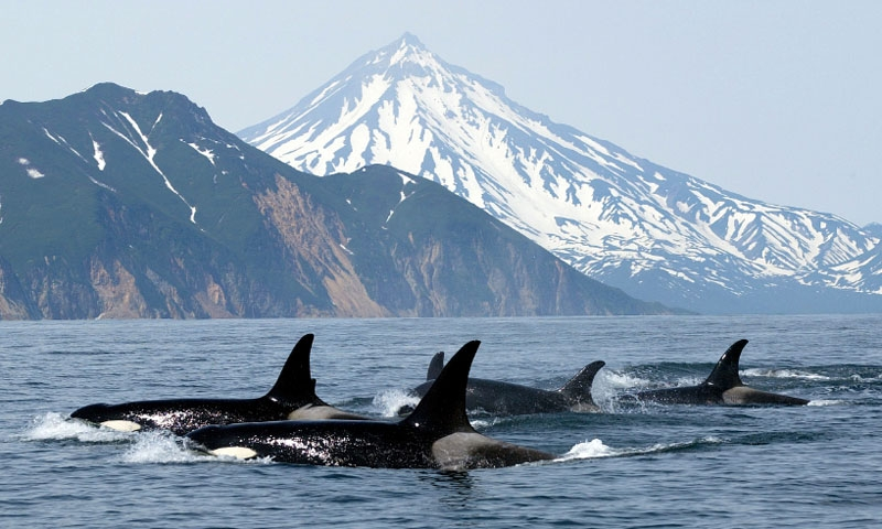 Port Angeles Whale Watching Olympic Peninsula Tours