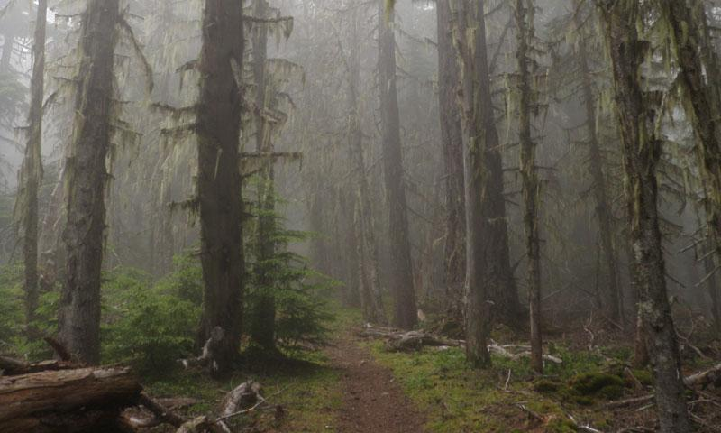 Deer Park Trail in Olympic National Park