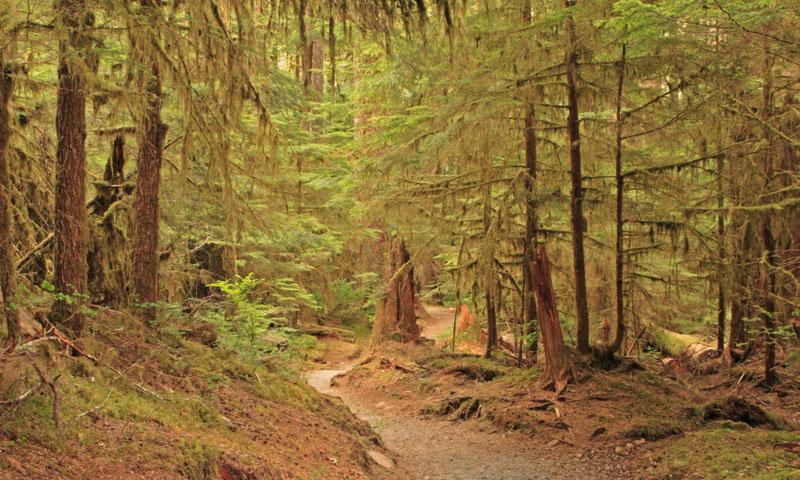 Sol Duc Falls Hiking Trail
