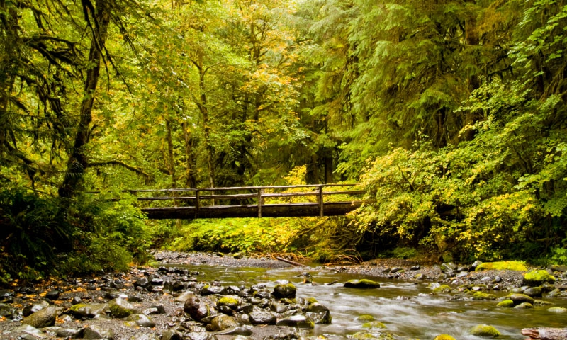 Dungeness River in Olympic National Park