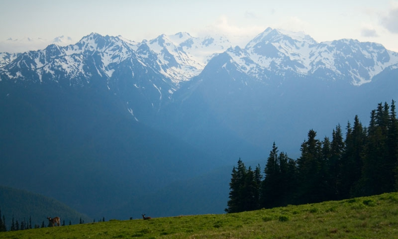 Mount Olympus from Hurricane Ridge in Olympic National Park