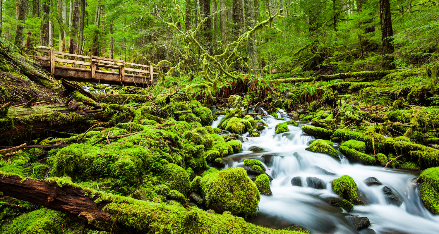 Olympic park port angeles olympic peninsula vacations for Cabin rentals olympic national forest